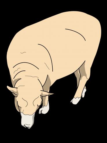 羊イラスト2