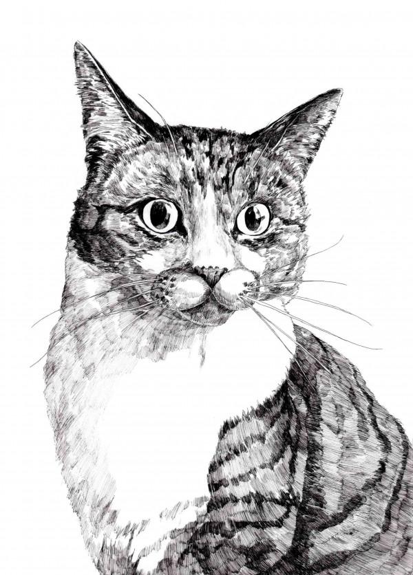 ペンで描いた猫