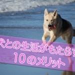 犬を飼う事によって得られる10のメリット。犬は人間の友達