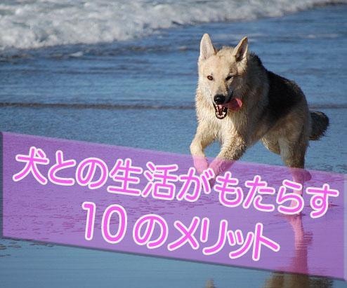 犬を飼うメリット