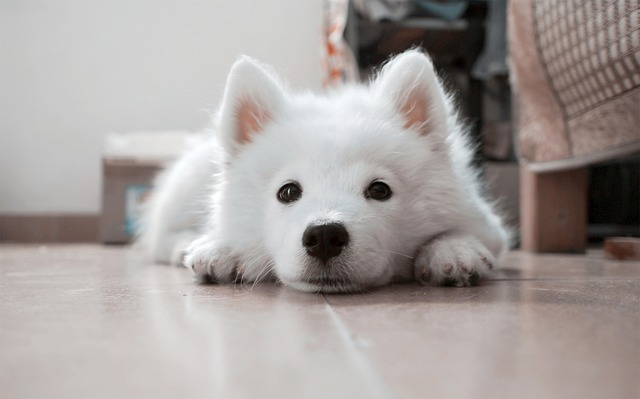 犬 アトピーにならない