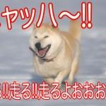 柴犬のいる日常。人生が4倍(シバ)楽しくなる動画像まとめ