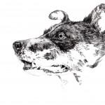 【細密画】現在進行中の犬のボールペンイラスト作業風景