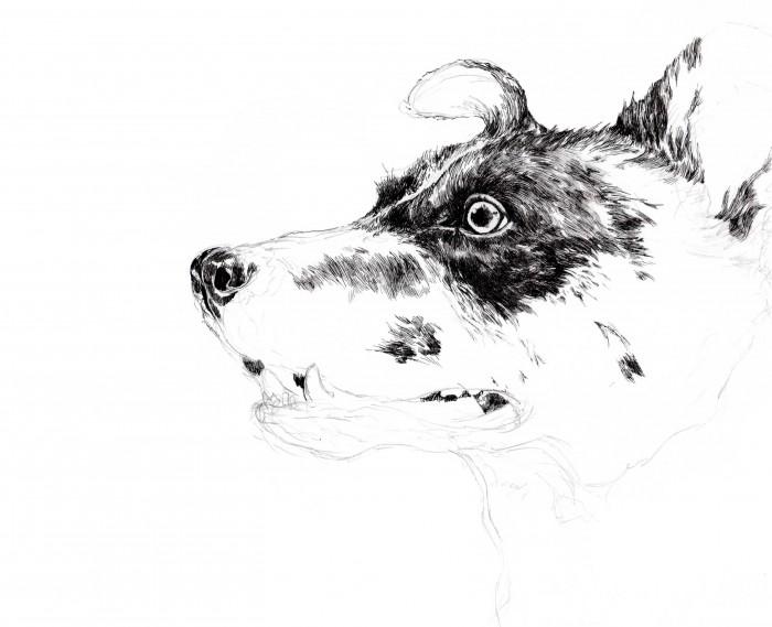 犬の細密画1