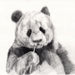 【デッサン基礎練習】パンダの描き方デッサン動画+画像解説