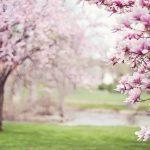 新春とはどんな意味・由来があるの?いつまで使っていいの?