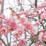 春分の日とはどんな日なの?意味や由来。2018年以降の日程は?
