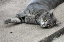 マイペース 猫